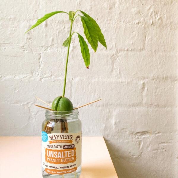 Mayver's Jar Repurpose Avo